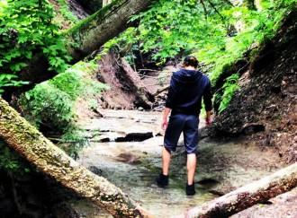 Hiking Chestnut Ridge