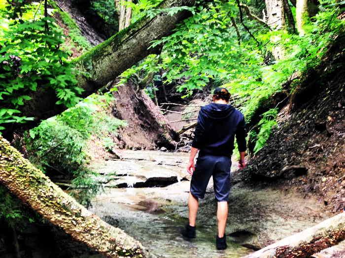 Chestnut Ridge