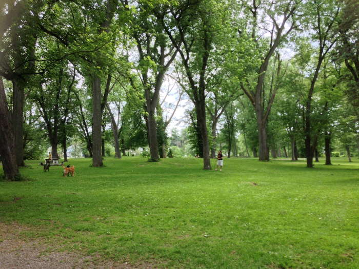 Ellicott Island Bark Park, Step Out Buffalo, Best Dog Parks in WNY