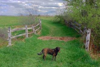 Knox Farm Dog Park, Step Out buffalo, East Aurora, Best Dog Parks in WNY