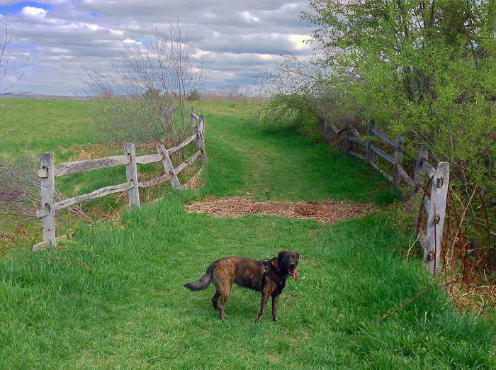 The Best Dog Parks to Let Your Pooch Run Wild & Free in WNY