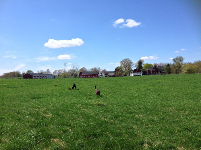 Knox Farm Dog Park, Step Out buffalo, East Aurora, Best Dog Parks in WNY