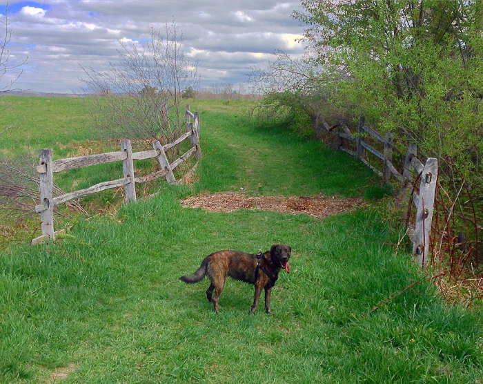 Knox Farm, East Aurora NY, Dog, Buffalo NY, Step Out Buffalo