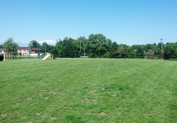 Lewiston Dog Park, Step Out Buffalo, The best dog parks in WNY