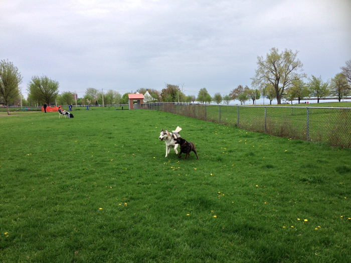 The Barkyard, Step Out Buffalo, The Best Dog Parks in WNY