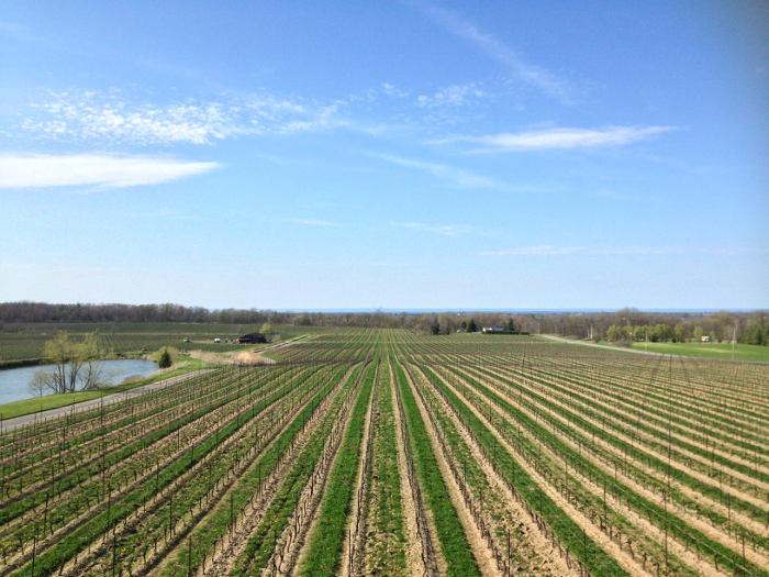 Niagara On The Lake, Winery, Step Out Buffalo