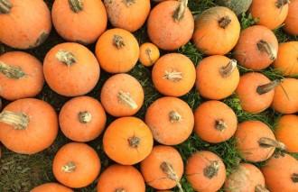 Pumpkins, Step Out Buffalo, WNY Fall Bucket List