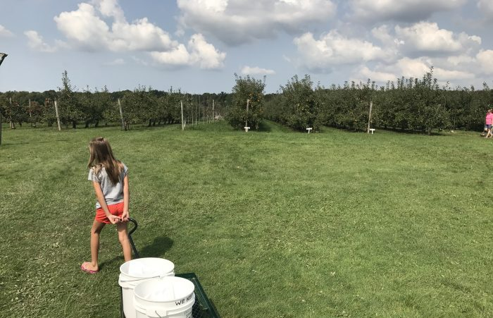 8 Orchards to Check Out During Prime Apple Picking Season