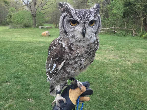 Hawk Creek Wildlife Center - West Falls