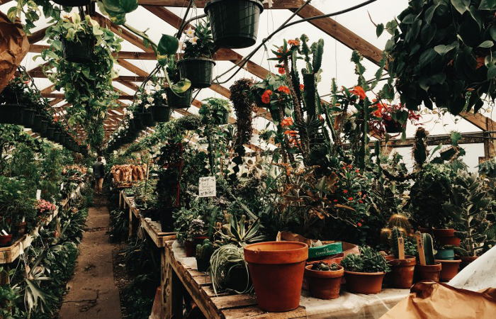 9 of Our Favorite Spots to Buy Houseplants, Succulents, and Cacti in WNY