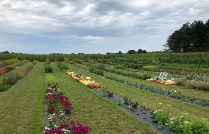 Most People Don't Know About This Pick-Your-Own Flower Farm Hiding in Springville