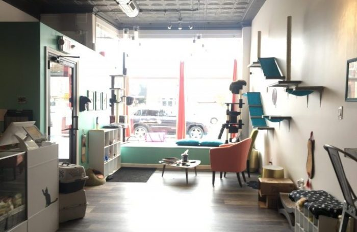 Buffalo's First Cat Cafe is Finally Open