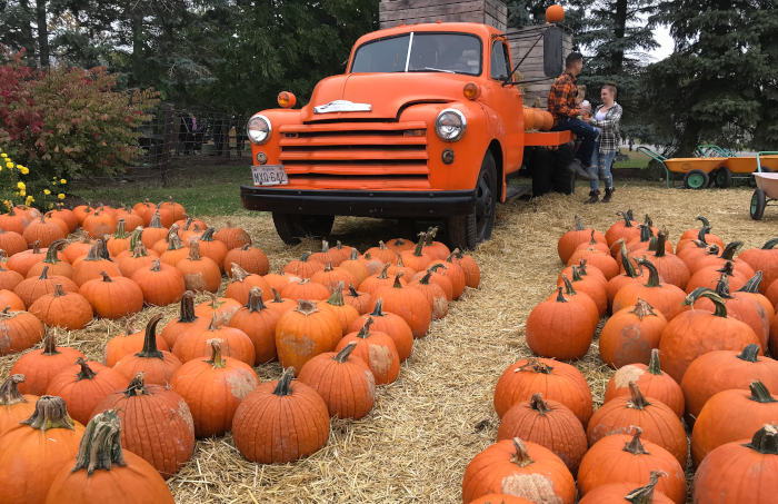 9 Super Fun Pumpkin Patches to Visit in WNY - Step Out Buffalo