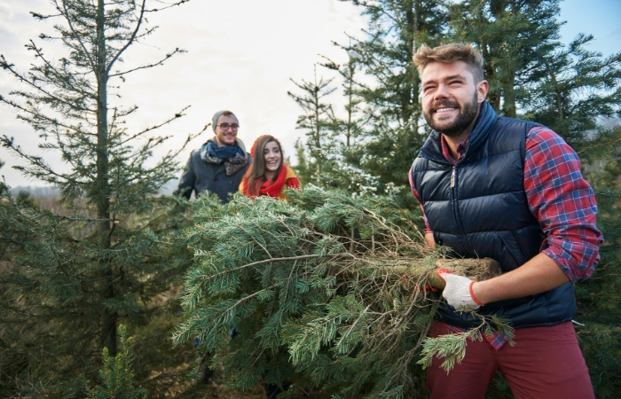 10 Nearby Farms Where You Can Cut Down Your Own Christmas Tree