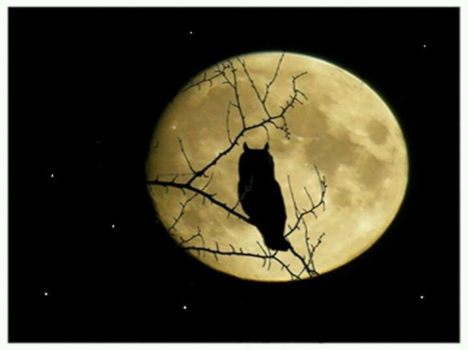 Owl Moon at Genesee County Village Musuem