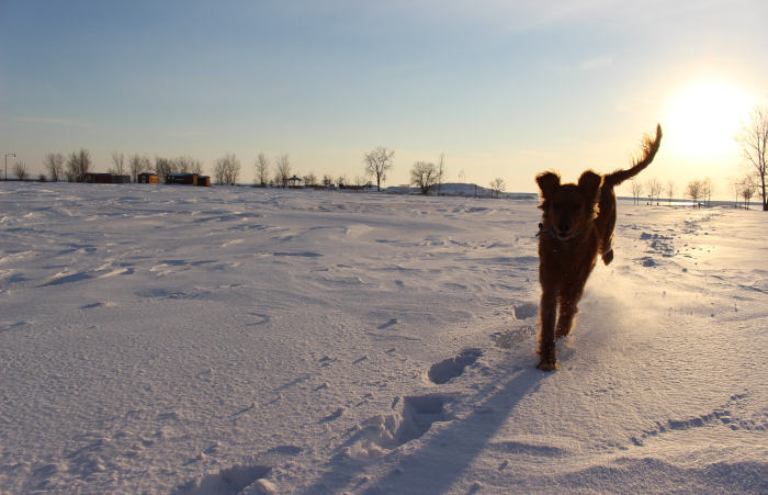 9 Winter Date Ideas for You and Your pup