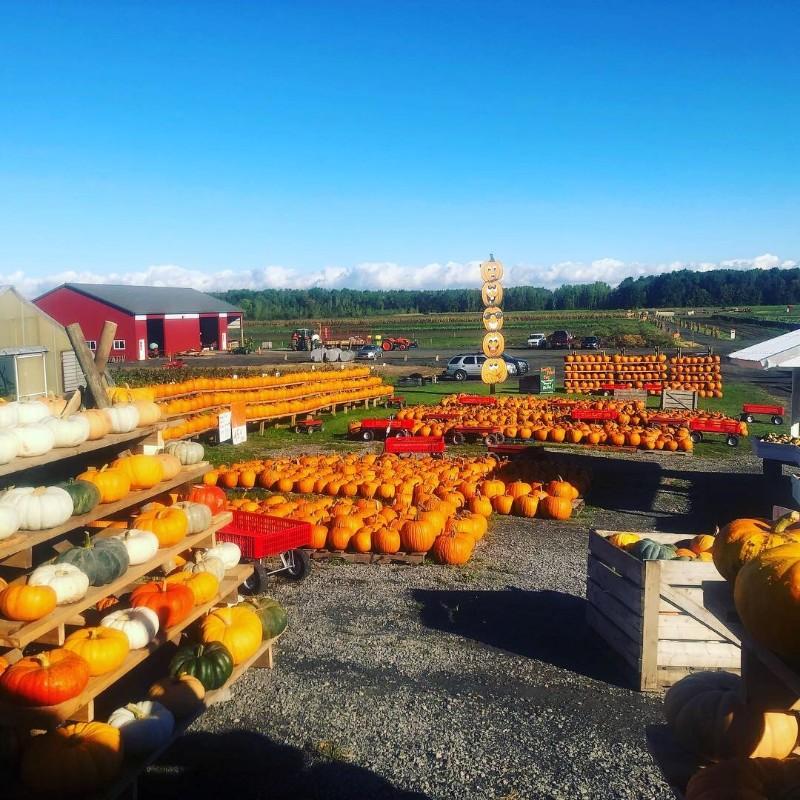 Pumpkin-Pic-Best