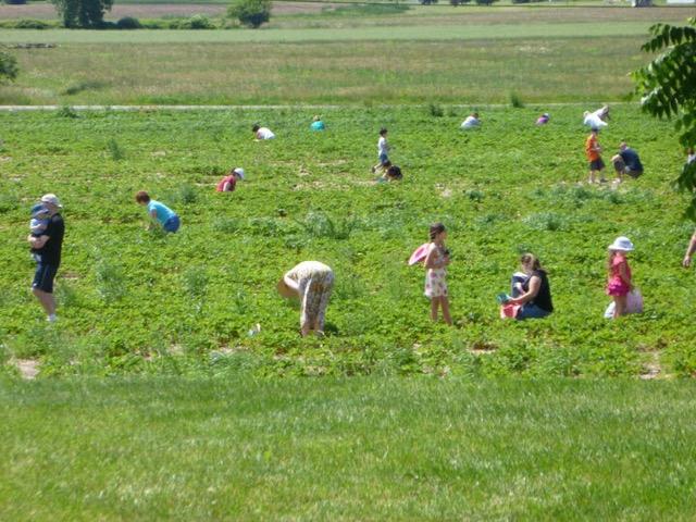 Greg's U-Pick Farm