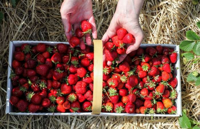 21 U-Pick Farms to Check Out This Season in WNY