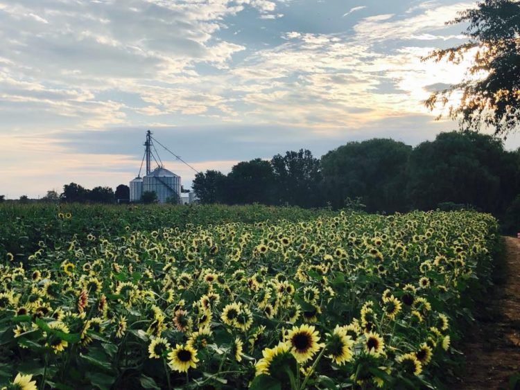 Your Guide To Flower Farms in WNY