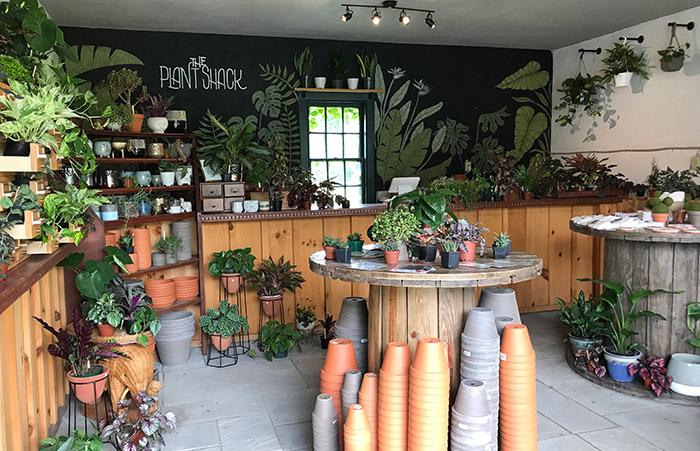 New: The Plant Shack Has House Plants Galore, Workshops & Plant Swaps