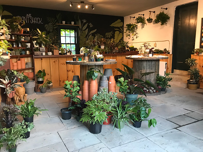 New: The Plant Shack Has House Plants Galore, Workshops & Plant