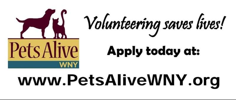 Pets Alive WNY Dog Adoption Center