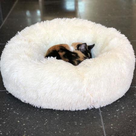 Buckminster's Cat Cafe