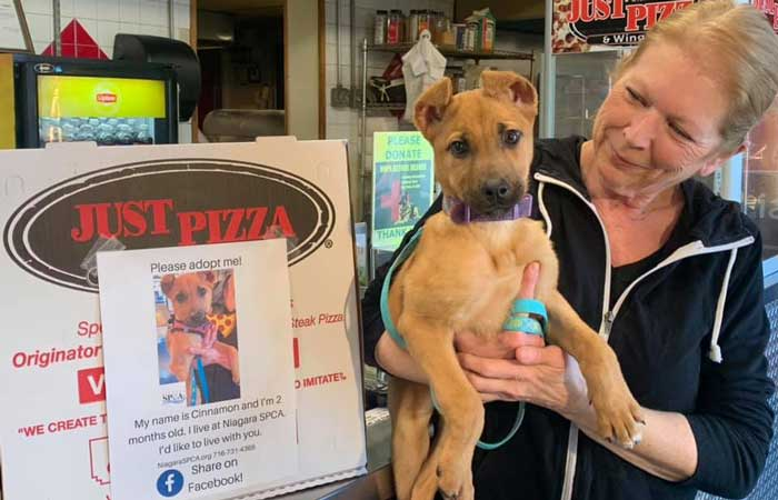 Buffalo Pizza Shop is Helping Adoptable Dogs Find Homes