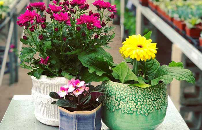 How to Shop at Your Favorite Local Plant & Flower Shops Right Now