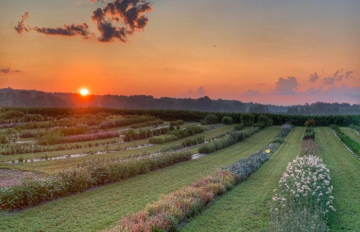 7 Charming U-Pick Flower Farms in WNY