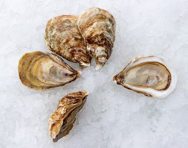 alchemy oysters