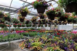Lockwood Nursery