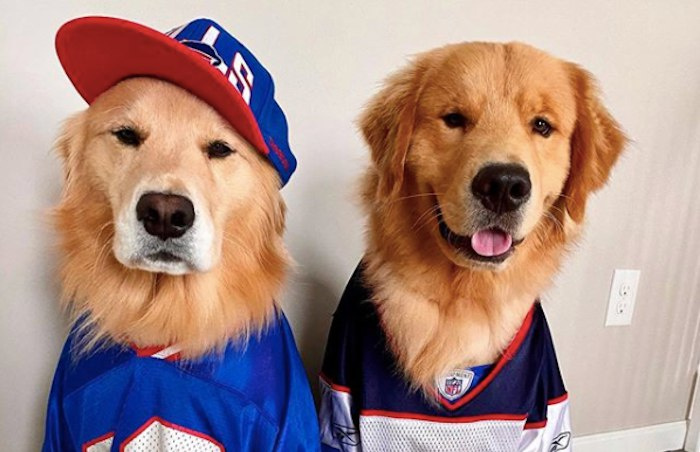 15 Adorable Dogs Dressed in Buffalo Bills Gear