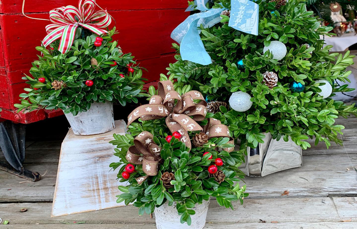 Lockwood's Garden Center is Ready for the Holiday Season