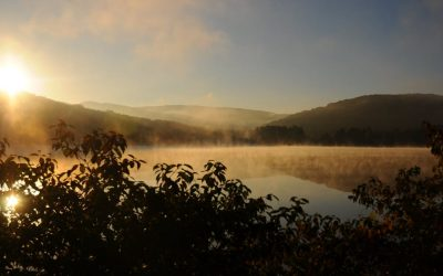 Ultimate Guide to Hiking in Allegany State Park
