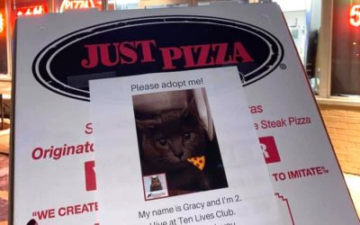 Local Pizza Joint Uses The Power Of Pizza To Help Homeless Cats
