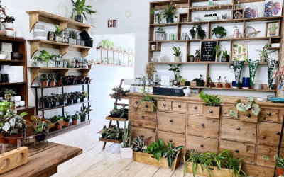 Ultimate Guide to Local Houseplant Shops Open Year-Round