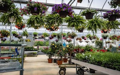 Springtime Essentials You'll Find at Waterman's Greenhouse