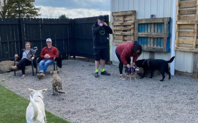 New: Barkology is the Most Dog-Friendly Bar in WNY