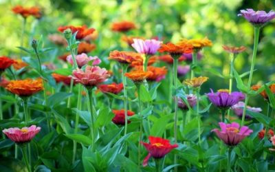 Guide to Garden Walks This Summer in Buffalo & WNY