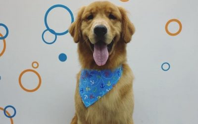 This Local Dog Grooming Company Won Big on ABC's 'Pooch Perfect'