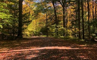 5 Chestnut Ridge Hiking & Running Trails You've Probably Never Heard Of