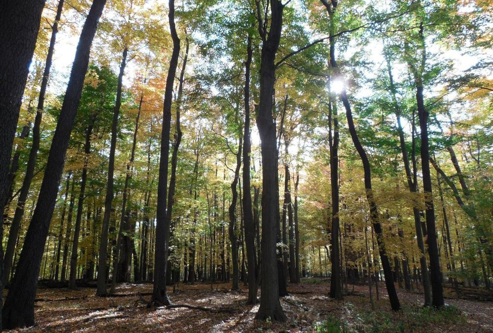 5 Hidden Gem Nature Trails To Check Out
