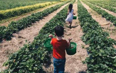 Your Guide to U-Pick Season at Becker Farms