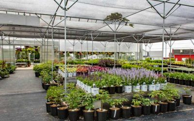 Planting Perennials This Season? Check Out These Helpful Tips from Waterman's Greenhouse