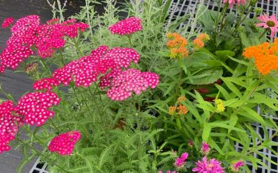 Enter to Win  a Pollinator Paradise Perennial Bundle from Waterman's Greenhouse