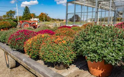 Prep Your Home for the Fall Season With Fall Greenery From Waterman's Greenhouse