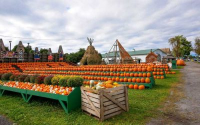 The Great Pumpkin Farm is Back and Bigger Than Ever