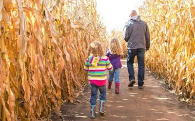 Now Open: Cambria Corn Maze is a Family Fun Experience for All